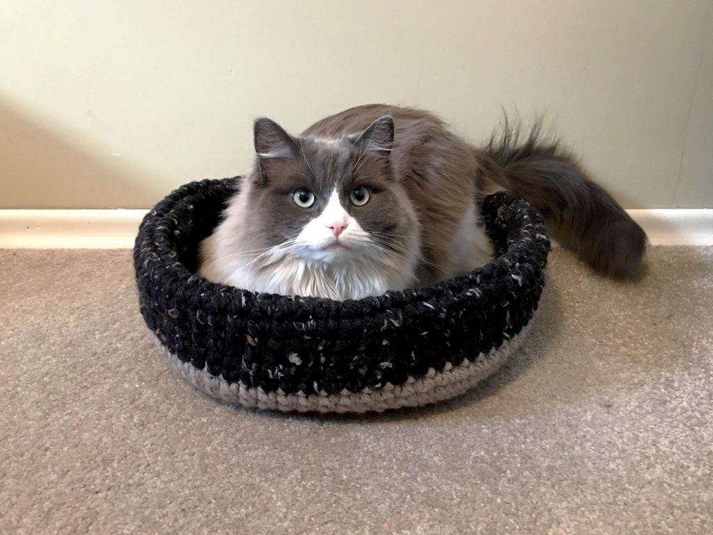 cat in a crochet cat bed