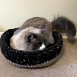 cat modeling the cat bed