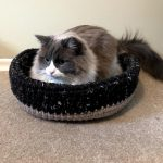 cat inside the cat bed on the floor showing its capacity
